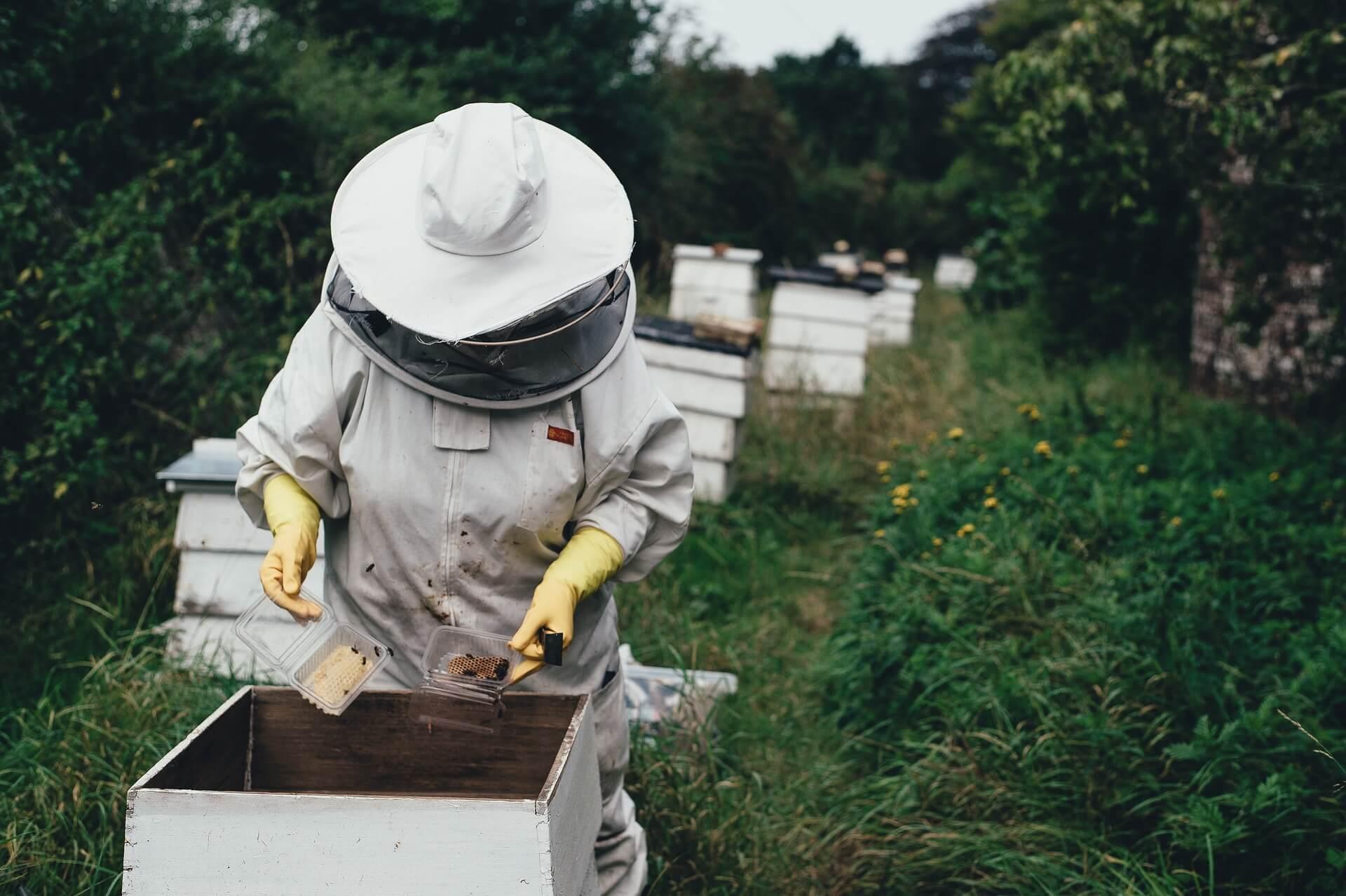 Los apicultores confirman la presencia de la avispa velutina en Palencia - Noticia - admaplagas.es