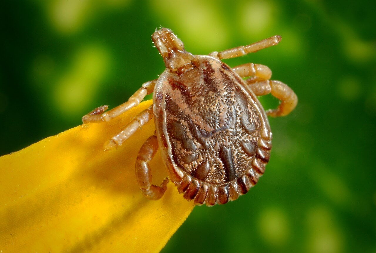 Se escapa una garrapata que transmite una enfermedad mortal durante una conferencia para prevenirla - Noticias - admaplagas.es