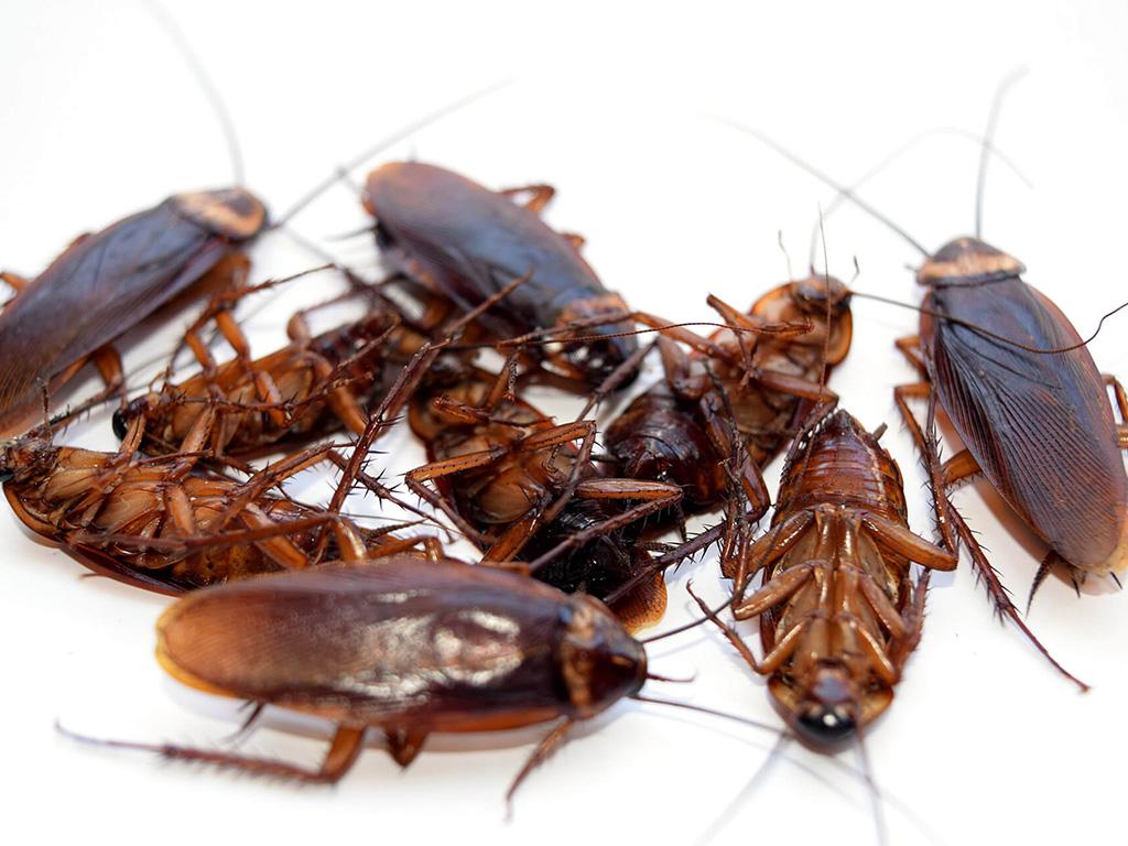 Eliminar cucarachas Madrid