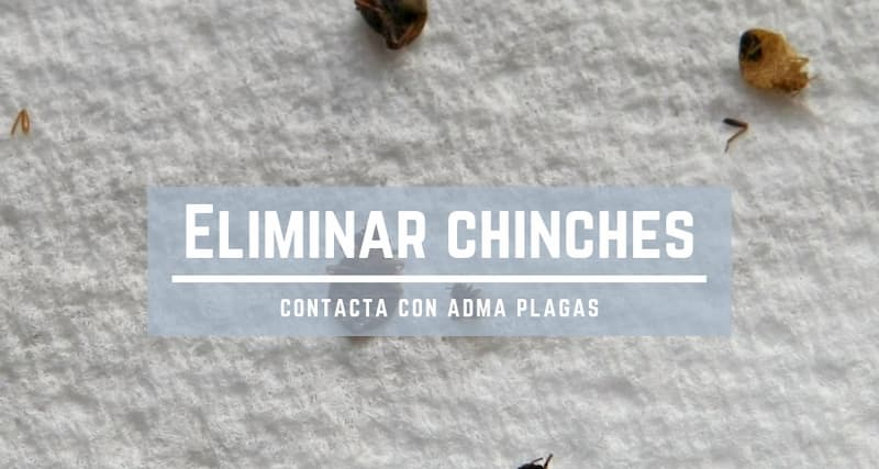 eliminar chinches