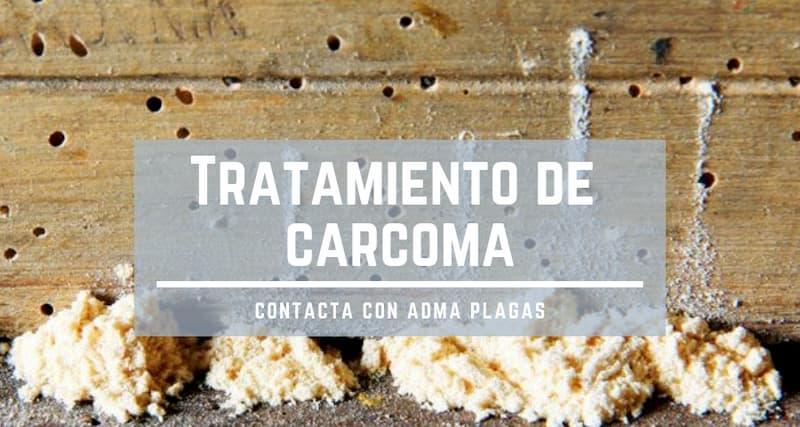tratamiento de carcoma