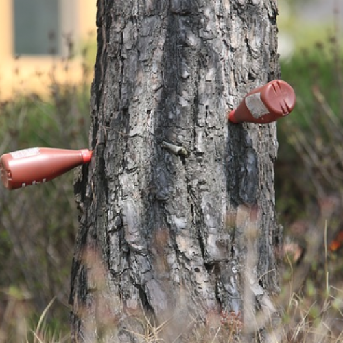 Endoterapia en otoño, solución clave para el control de la oruga procesionaria