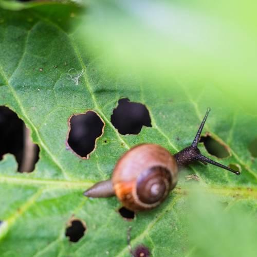¿Cómo evitar o eliminar los nidos de insectos durante el invierno?