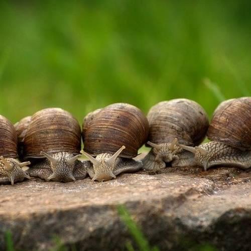 Curiosidades sobre los caracoles