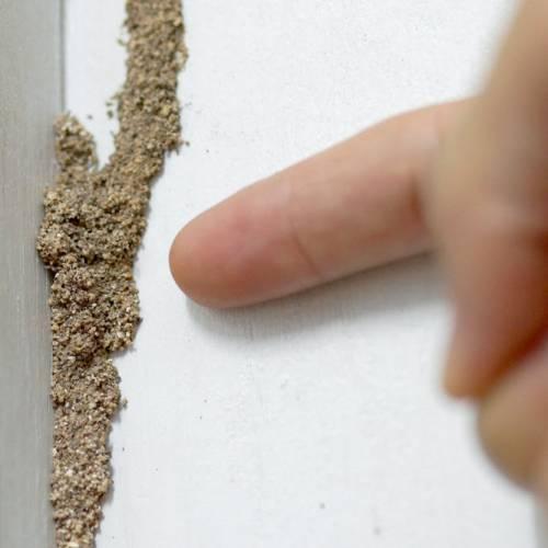 Cómo detectar la presencia de una plaga de termitas