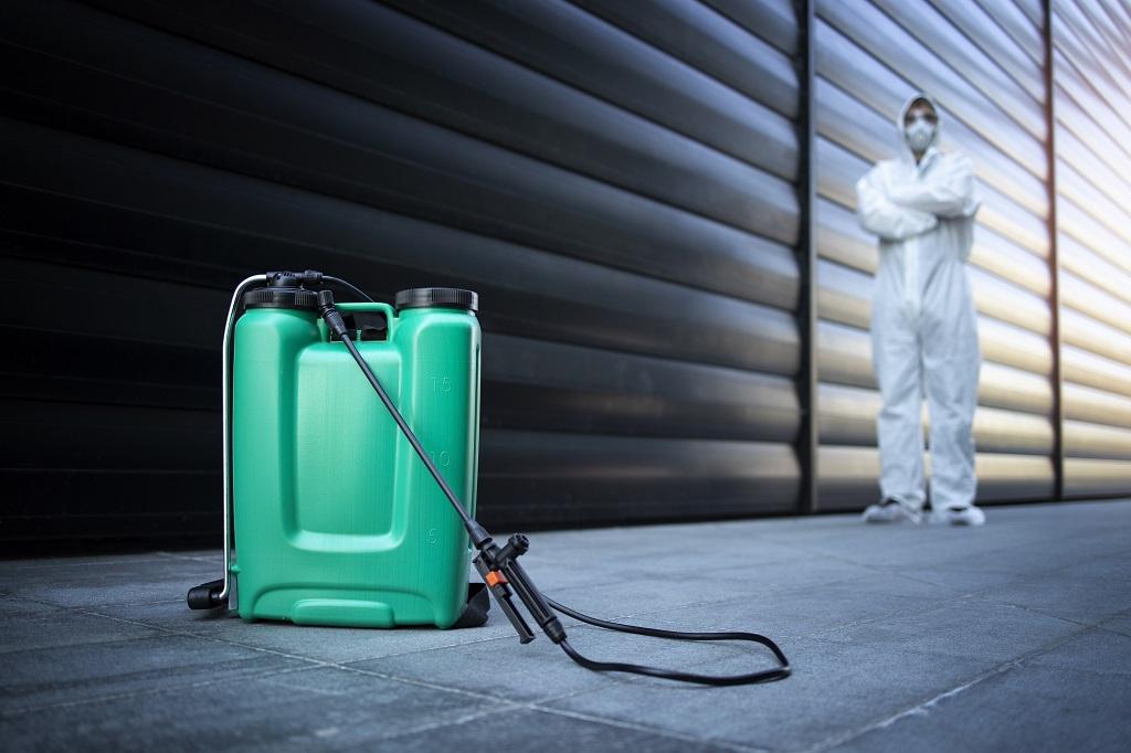 plagas que pueden afectar a tu casa